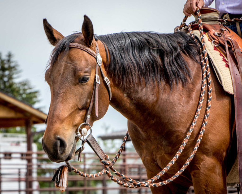 horsemanship-internship-buck-brannaman-clinics-montana-cow working