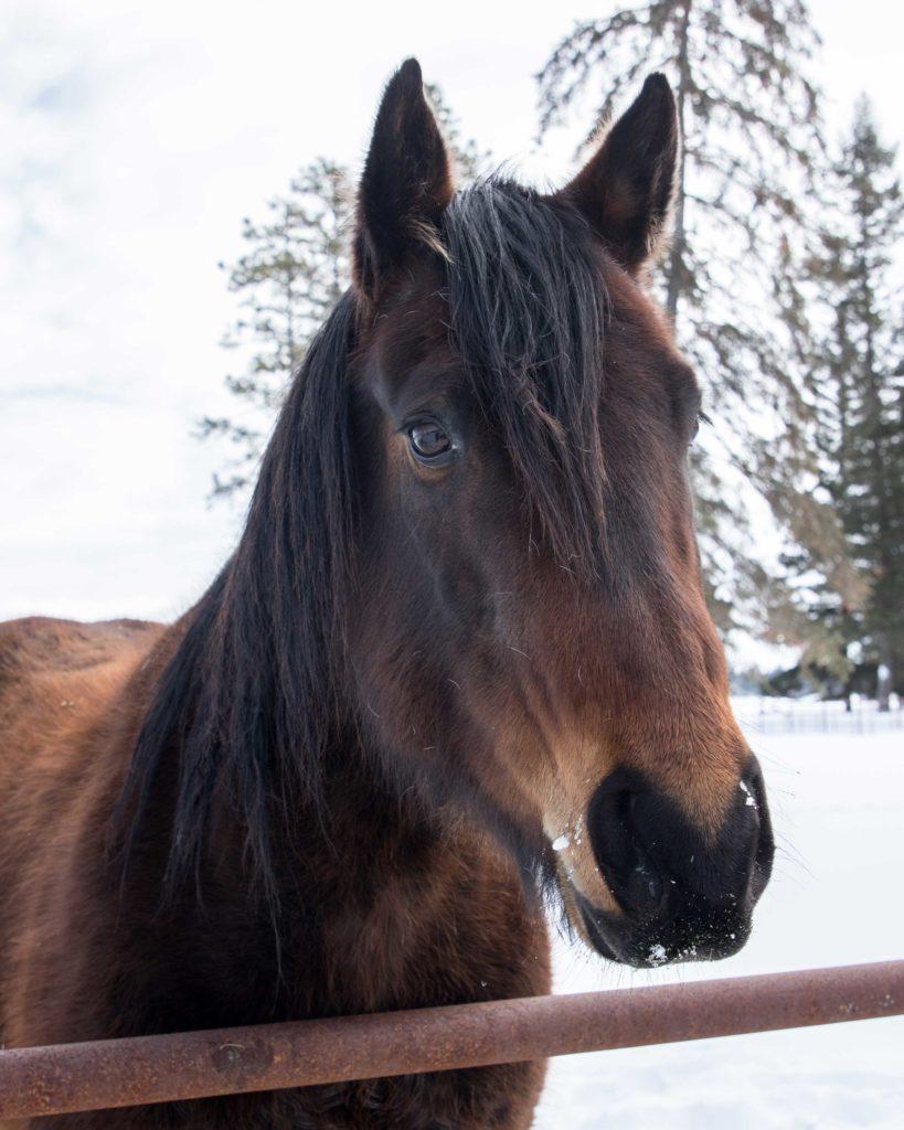horsemanship-internship-ranching